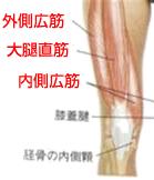 太もも前面の大腿四頭筋
